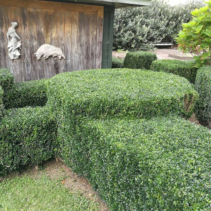 box hedge garden maintenance