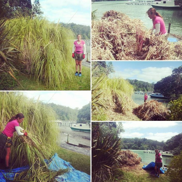 pampas removal gardening north shore