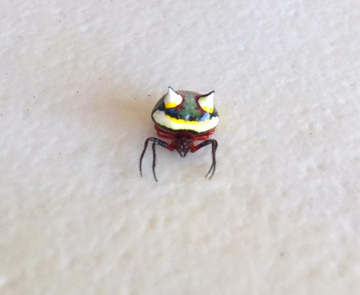 two spined spider